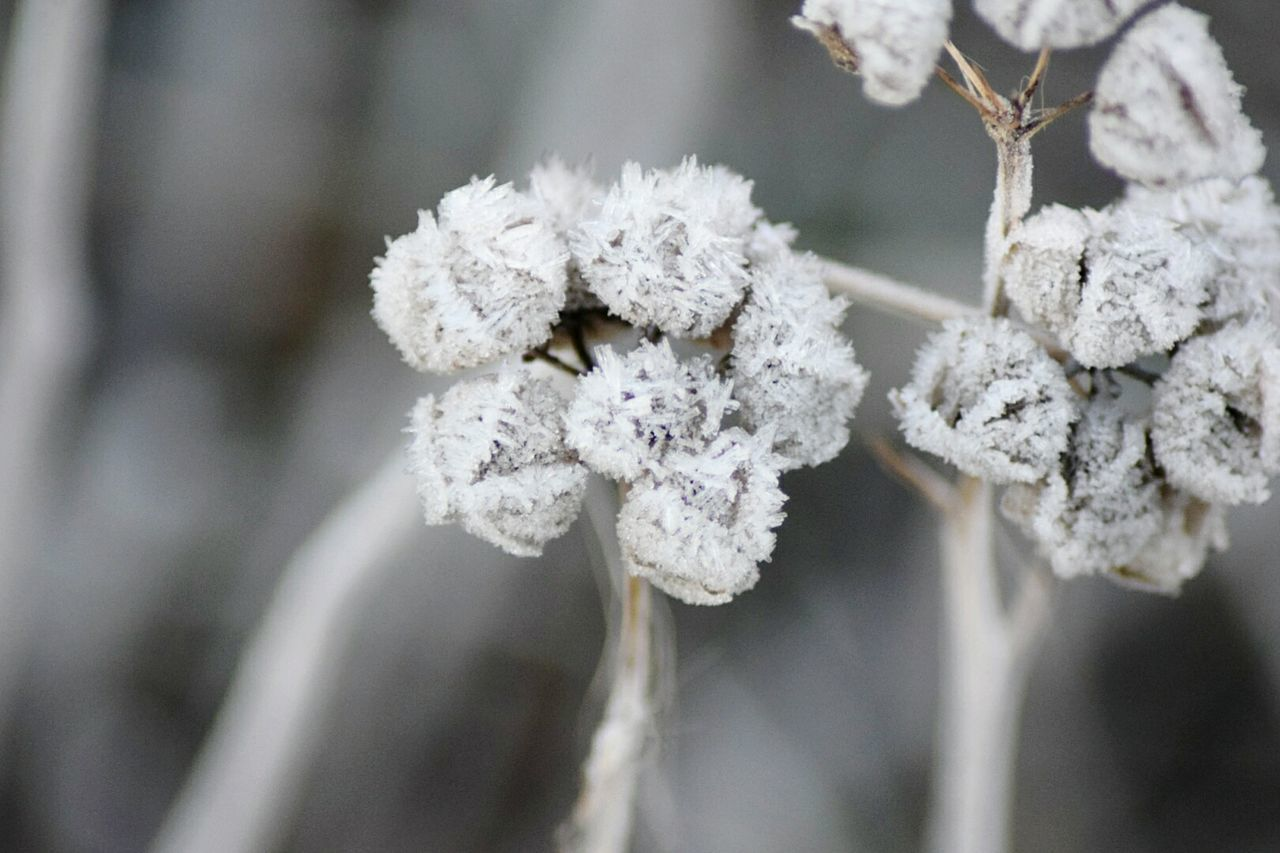 Winter Cold Temperature Snowflake Outdoors No People Nature Snow Beauty In Nature Nature Hobbyphotography