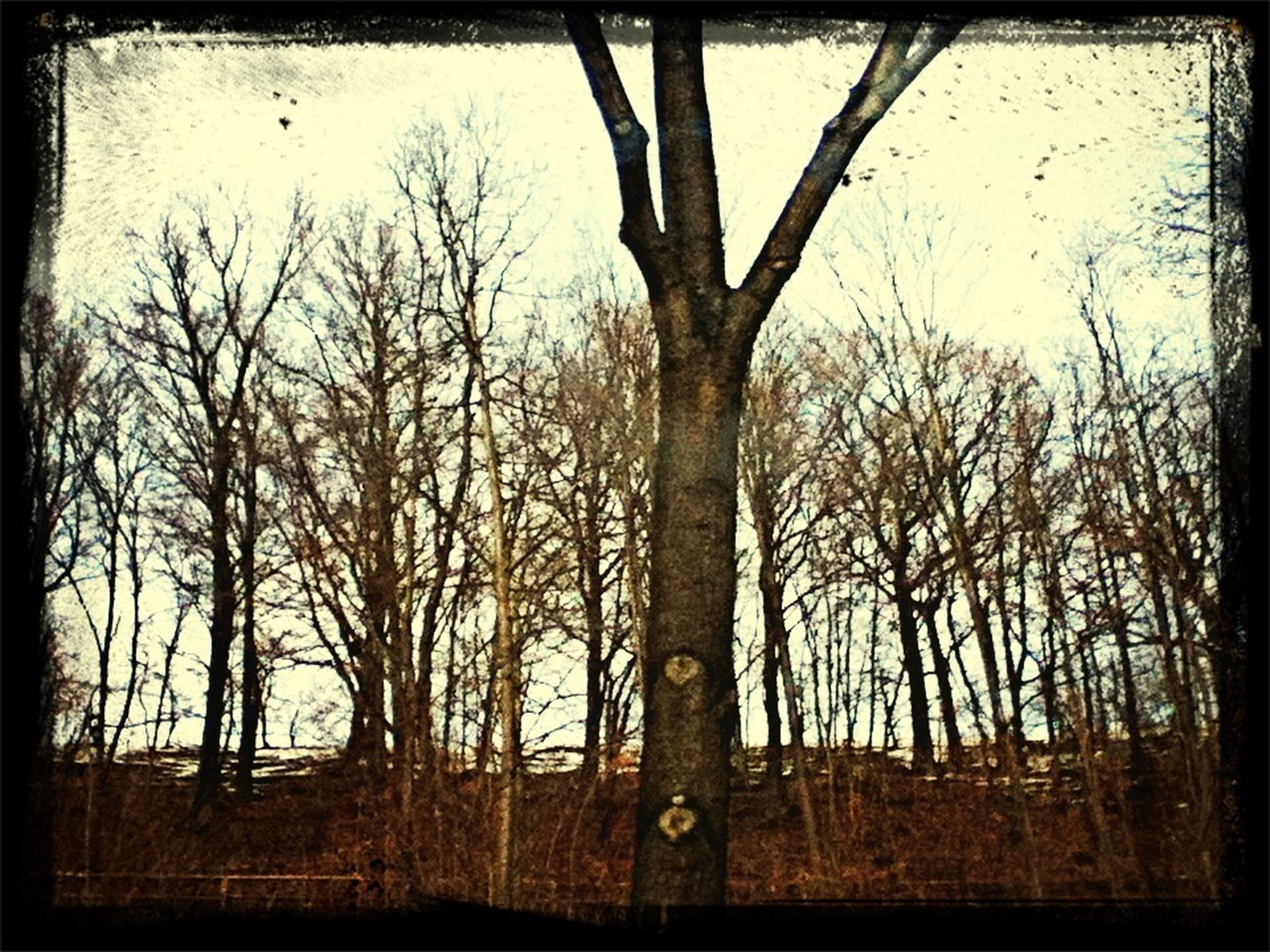transfer print, tree, bare tree, auto post production filter, branch, tranquility, tree trunk, tranquil scene, nature, forest, scenics, growth, woodland, sky, beauty in nature, landscape, non-urban scene, no people, outdoors, field