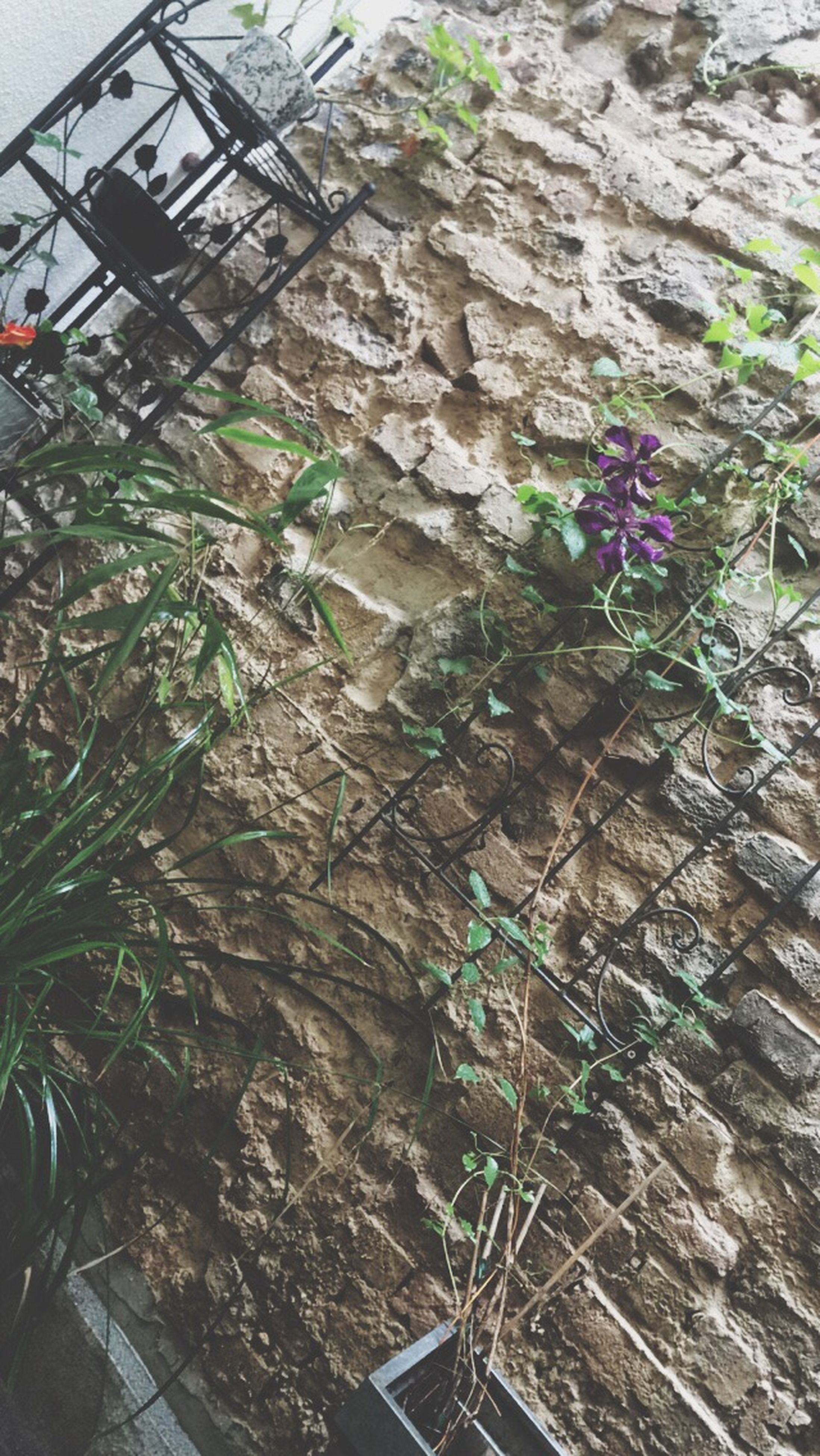 plant, growth, high angle view, built structure, day, outdoors, no people, wall - building feature, architecture, building exterior, nature, flower, sunlight, growing, close-up, transportation, low angle view, abandoned, tree, leaf