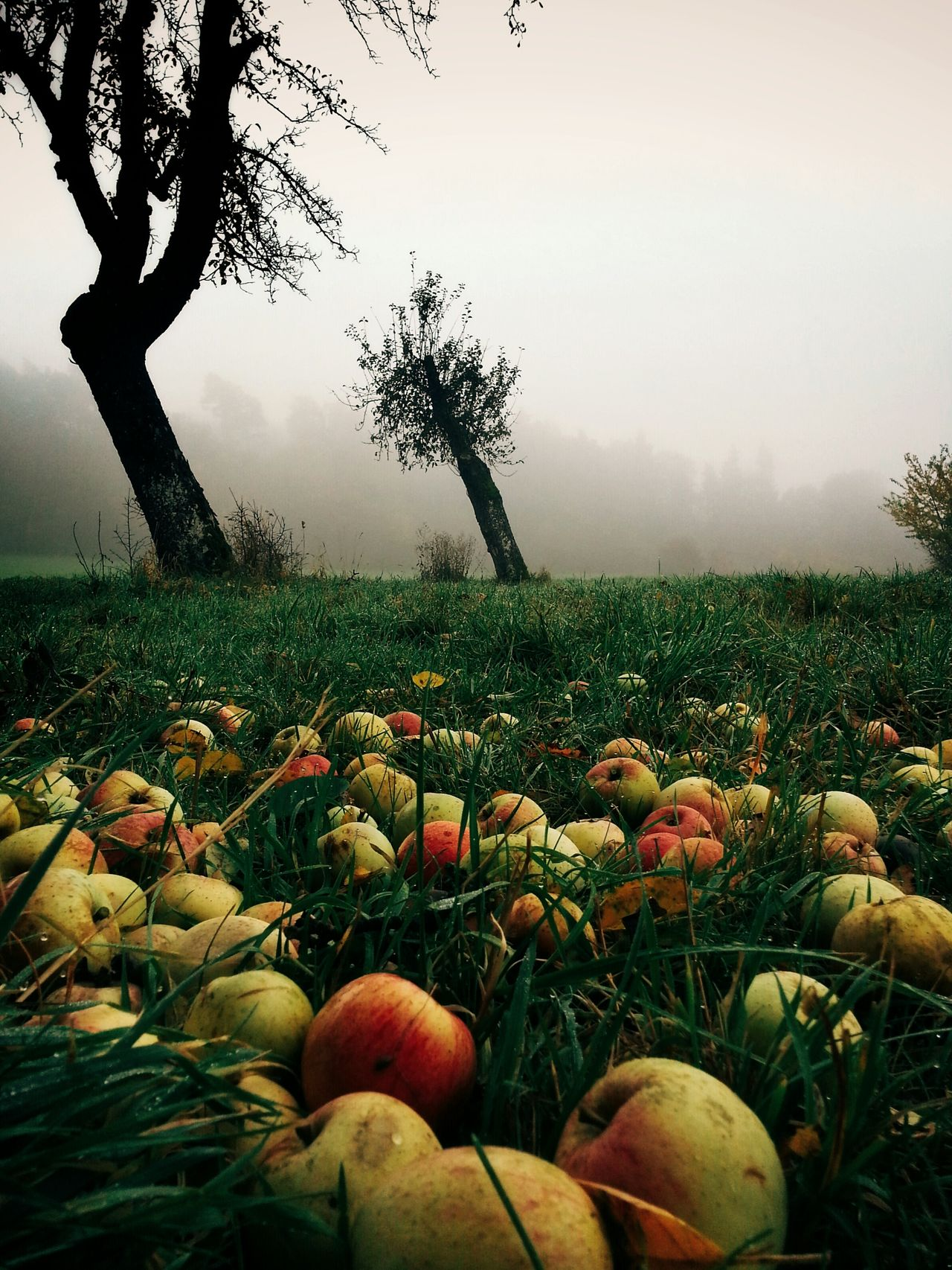 Beautiful stock photos of apple, Apple, Beauty In Nature, Copy Space, Day