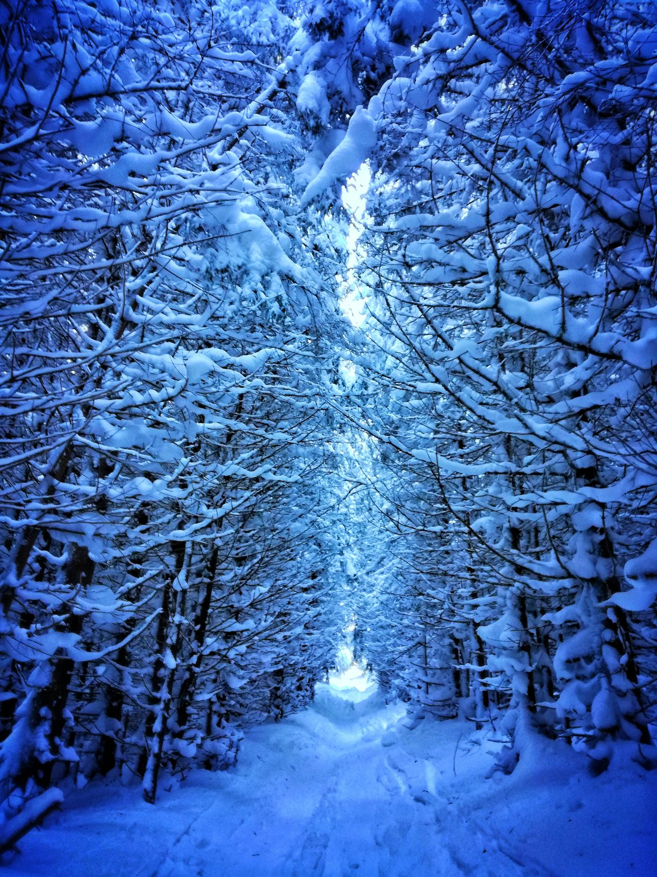 Walk towards the light Winter Cold Temperature Snow Blue Weather Tree Nature Frozen No People Outdoors Day Beauty In Nature Close-up Backgrounds Snowy Trees Snow ❄ Snowy Forest Forest Park Forest Path Snowy Path Path Through The Woods Path Through The Trees Path Through Forest. Dark Snowy Path Snowscape Miles Away