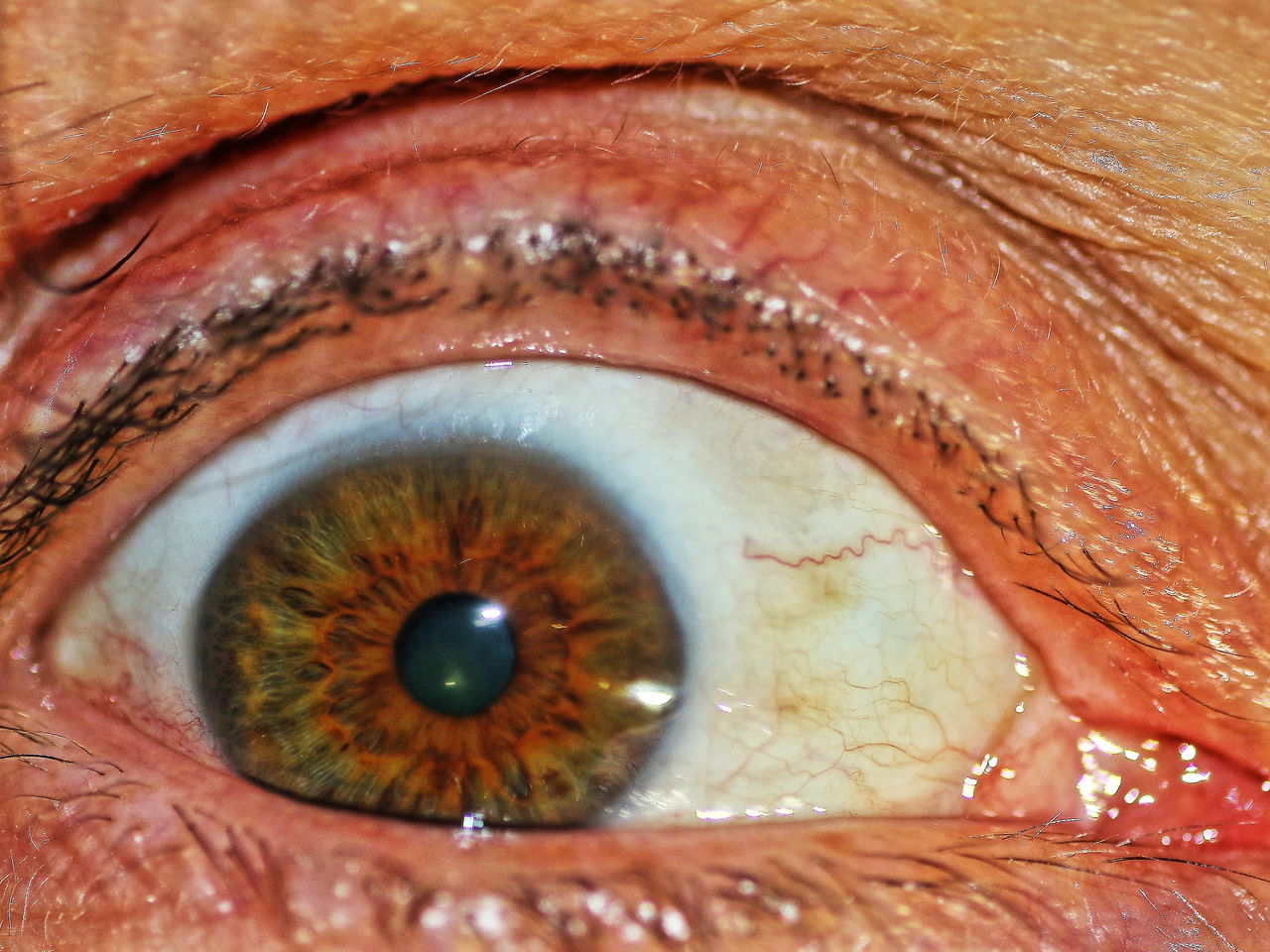Cropped Extreme Close-up Eyelash Human Eye Human Skin Macro Occhi Selective Focus 479