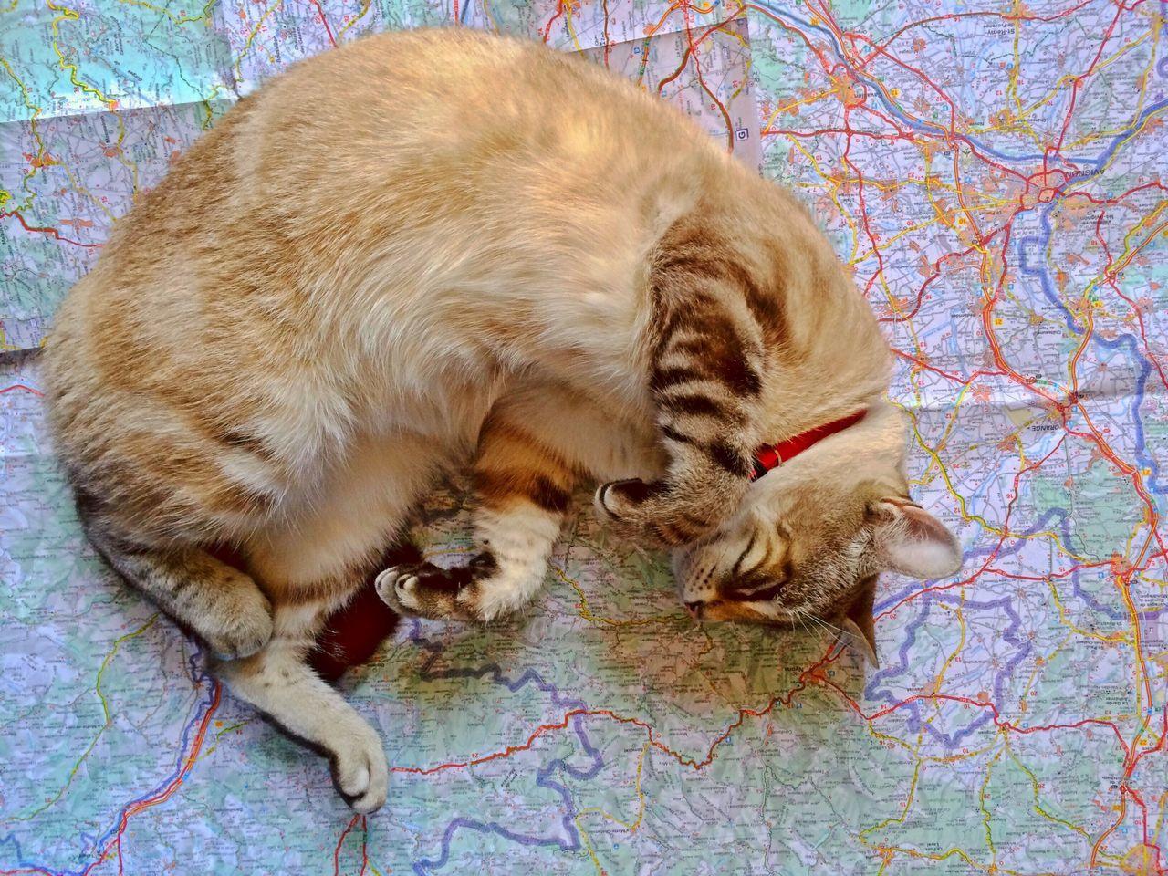 Beautiful stock photos of map, Animal Themes, Cartography, Cat, Domestic Animals