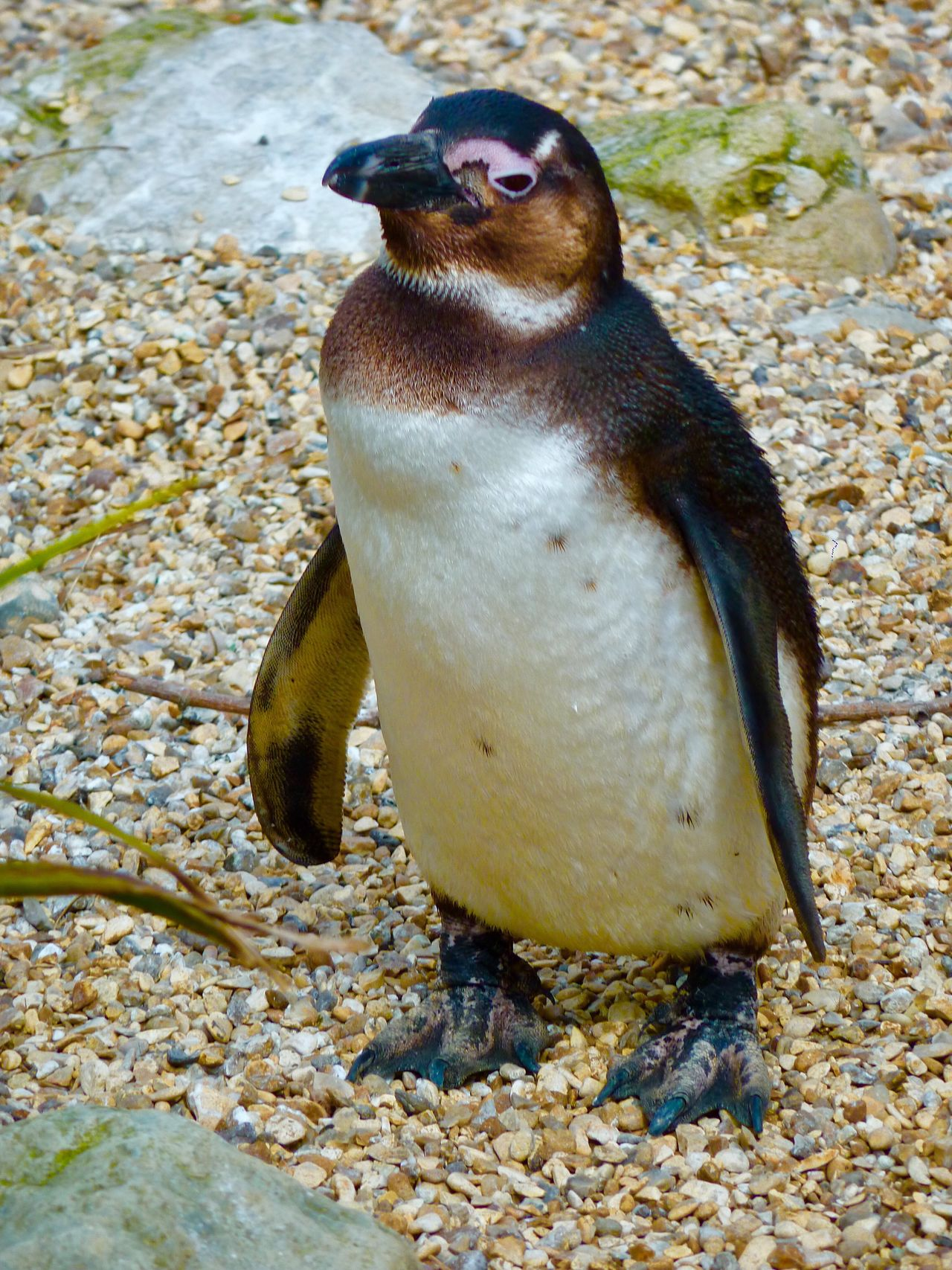 Penguin Whipsnade Zoo One Animal Animals In The Wild Animal Themes Animal Wildlife No People Day Beach Sea Lion Outdoors Sand Sea Life Nature Close-up Bird Water Mammal