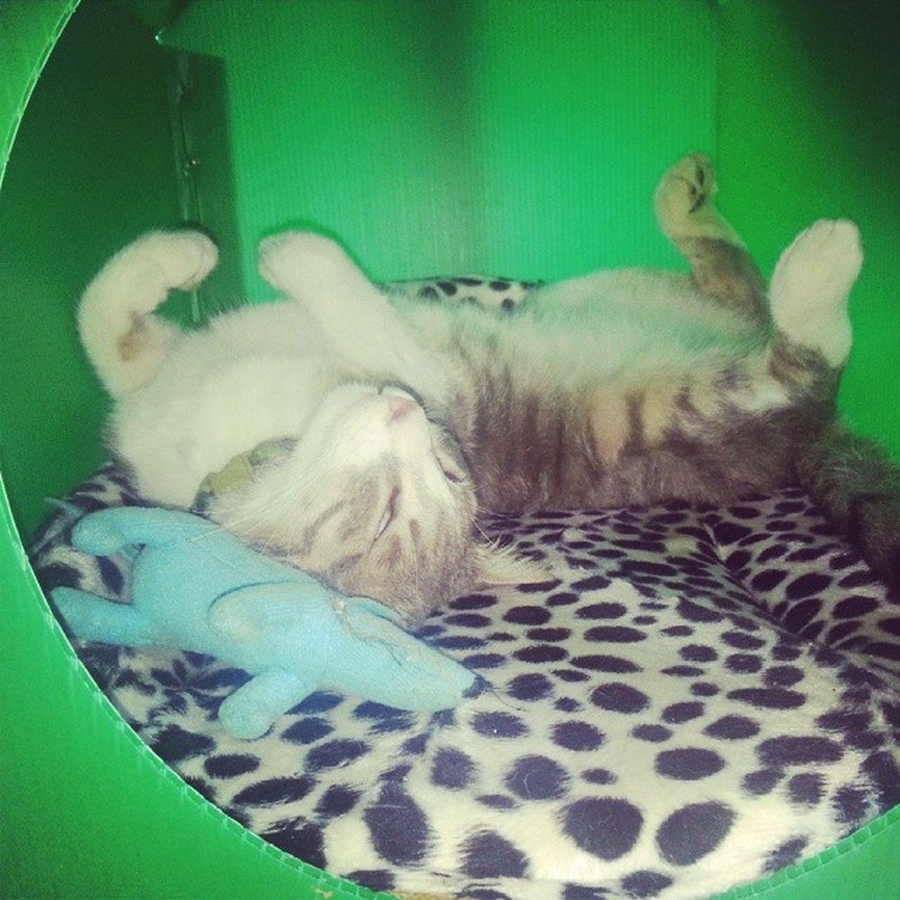 Pes etti oynamaktan helva gibi uyudu yorgunluktan Cat Cats Bilboo Instamood instagoodpicoftheday