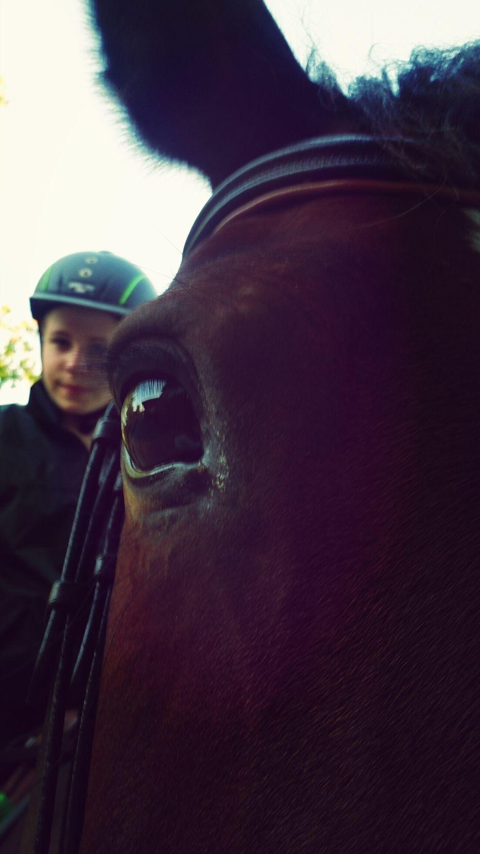 Das Glück Der Erde Liegt Auf Dem Rücken Der Pferde :) Ombra Bestes Pferd Springreiten