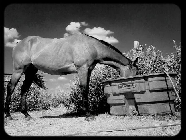Black And White Horse - went a little Ansel Adams on this one.