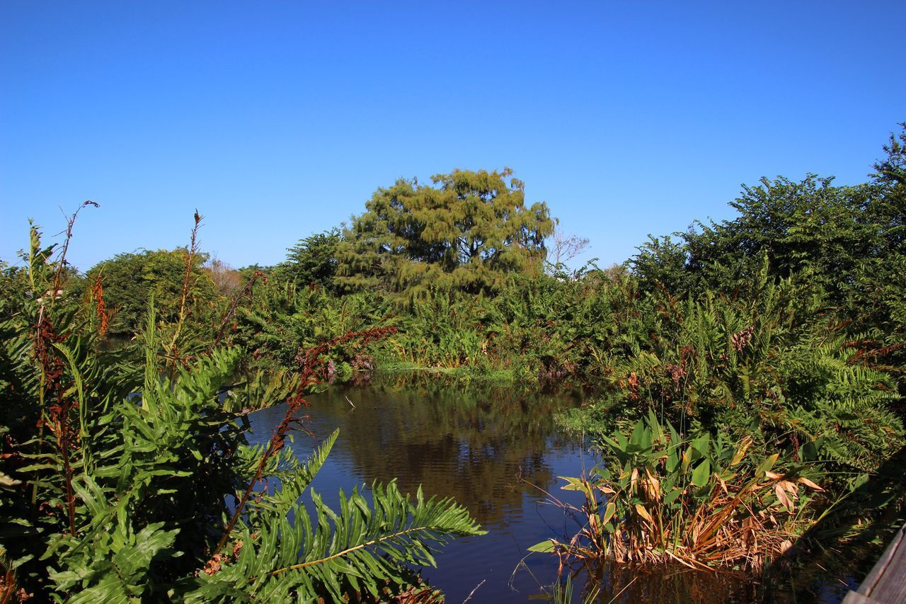 nature, clear sky, growth, vegetation, blue, water, lake, tree, beauty in nature, outdoors, blue sky, no people, day