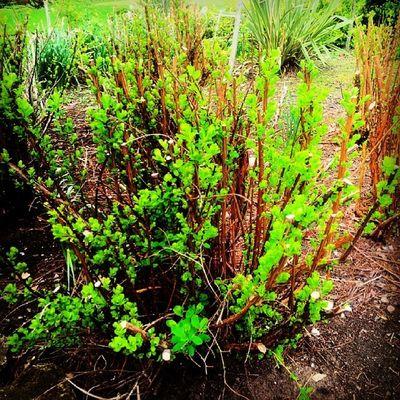 Bush Nature Kingsheathpark Green Spring2014