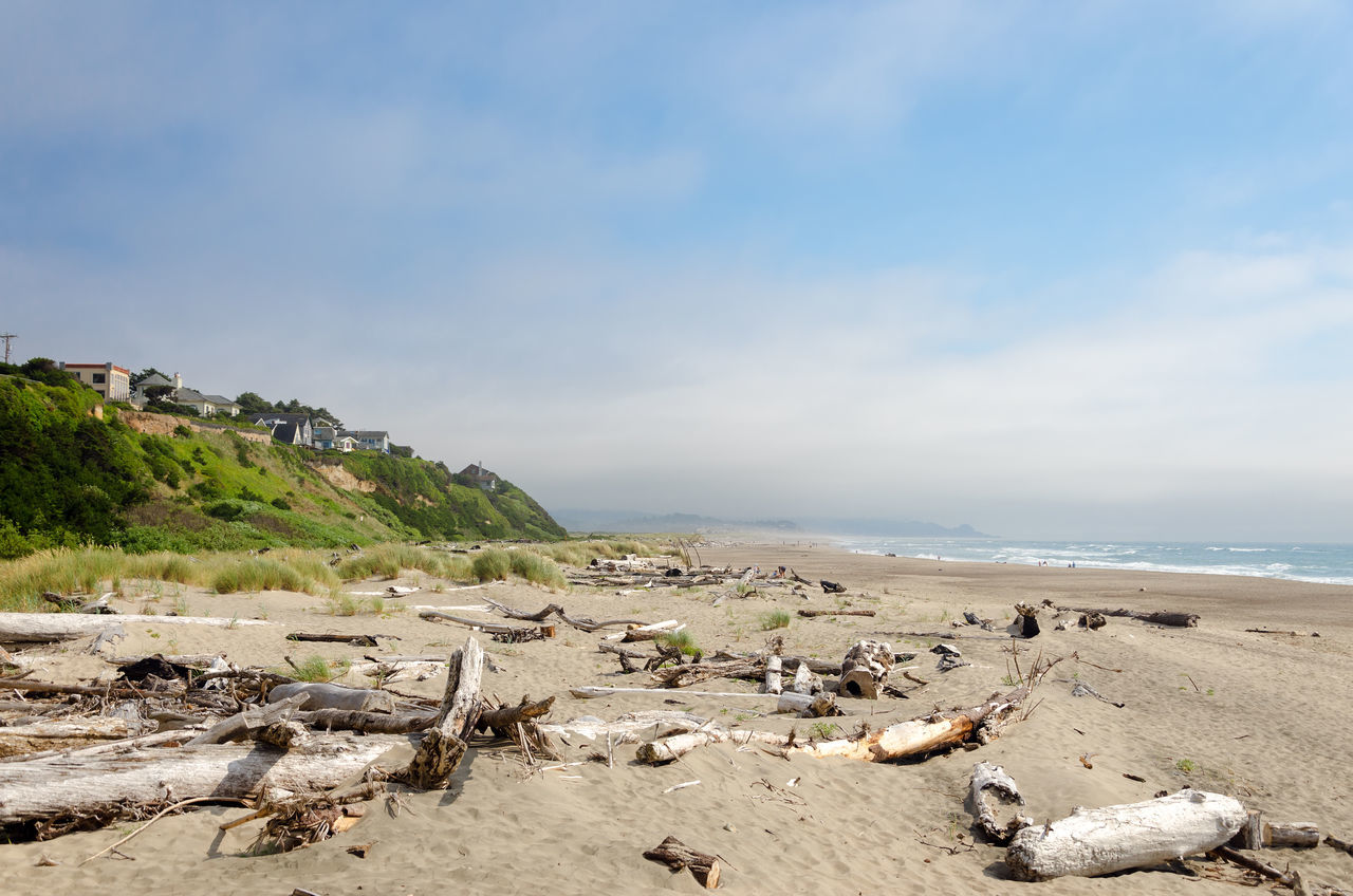 Driftwood covered beach at Lincoln City, Oregon Beach Beauty Coast Coastal Dune Dunes Environment Grass Landscape Lincoln City Lincoln City Beach Lincoln City, Oregon Natural Nature Oregon Oregon Coast Outdoor Outdoors Sand Sea Summer Sunlight Texture Textured  Water