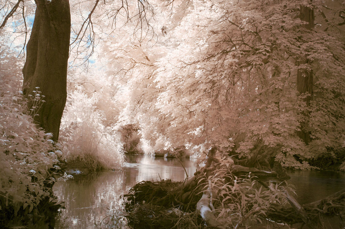 Abstract Beauty In Nature Box Hill Colour Day Different Forest Growth Infrared Infrared Photo Infrared Photography IR IR Photo Ir Photography Nature Nature Nature Photography Nature_collection Naturelovers No People Outdoors Photography River Tree Water