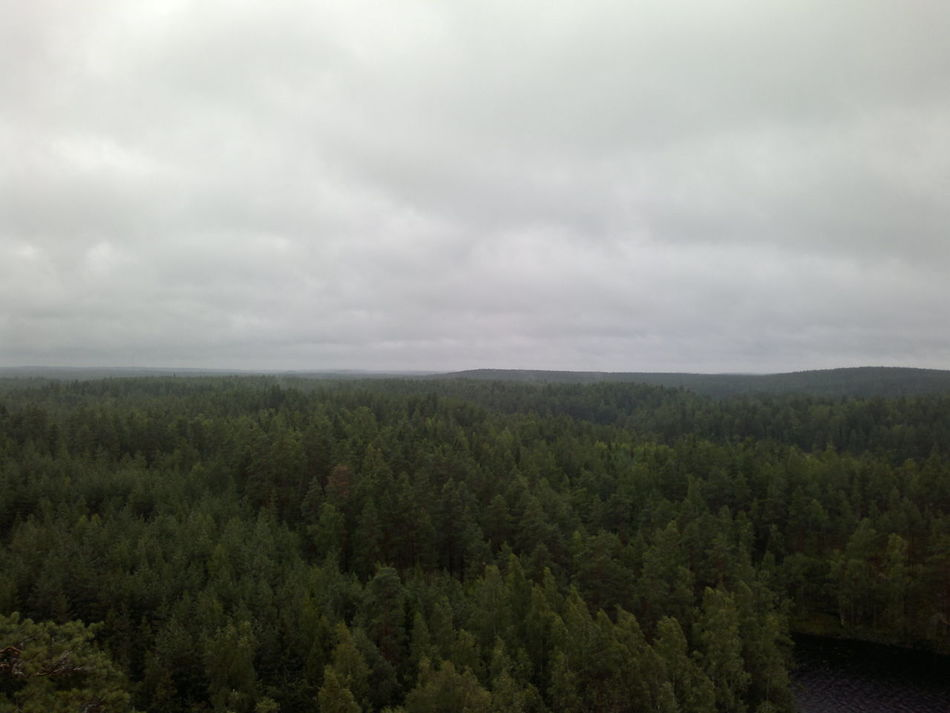 Finnish forest landscape in cloudy weather at Repovesi National Park Beauty In Nature Cloud - Sky Clouds And Sky Day Endless Forest Finnish Forest Finnish Nature Forest Forest Photography Landscape National Park Nature Nature Photography No People Outdoor Photography Outdoors Rainy Day Rainy Weather Scenics Sky Tranquility Tree Trees And Nature