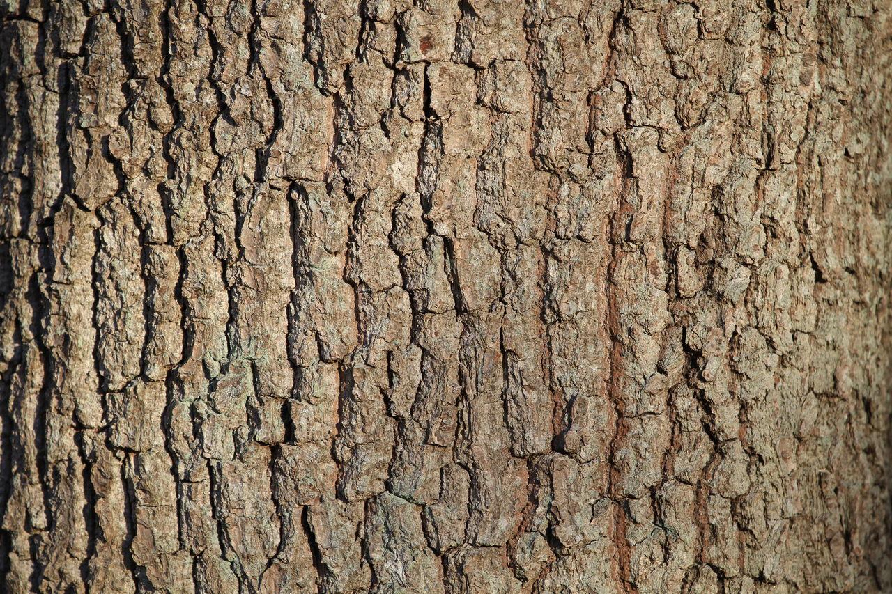 Full Frame Shot Of Textured Tree Trunk