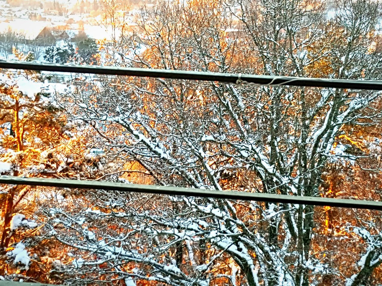Outdoors Nature Vibrant Color Leaf Orange Color Snowy Day Morninglight Shadows & Lights Outdoors Life Snow Covered Sweden