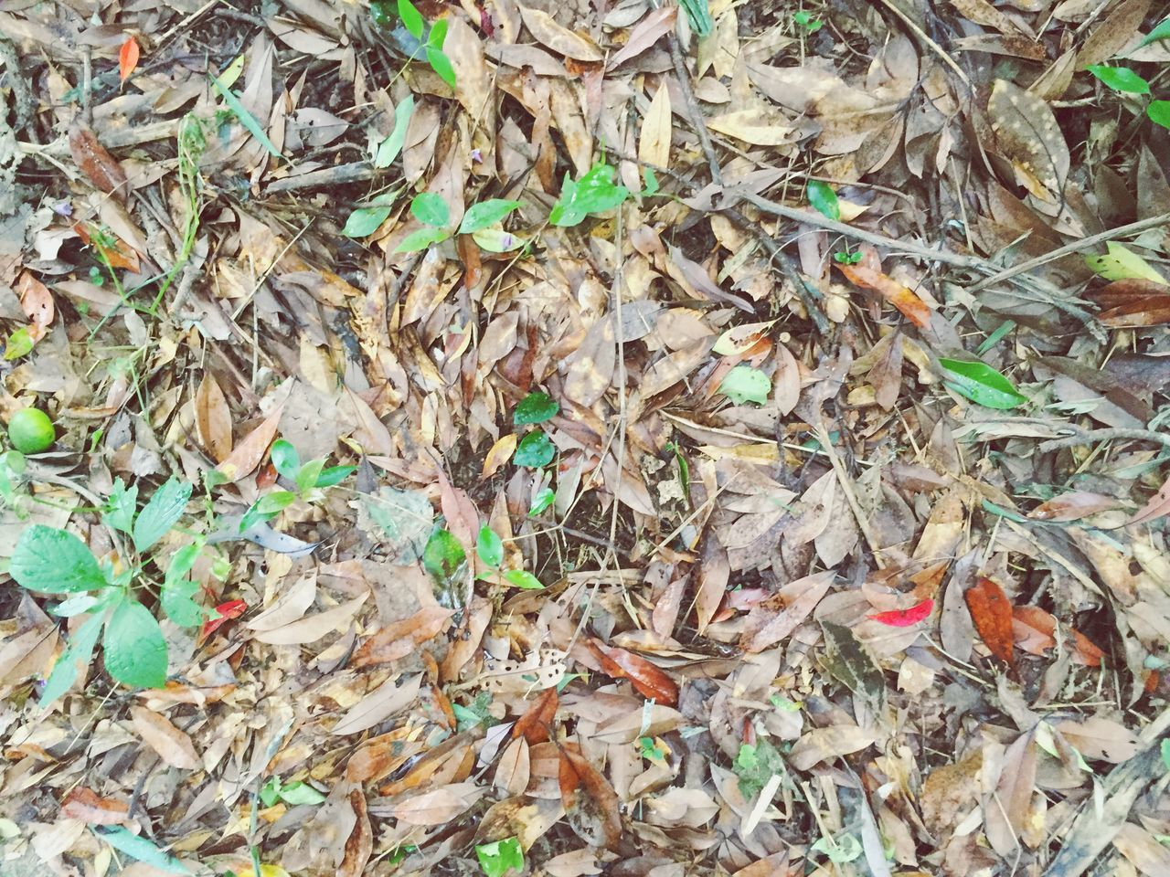 leaf, garbage, dry, full frame, high angle view, large group of objects, abundance, day, no people, field, outdoors, nature, change, close-up, backgrounds