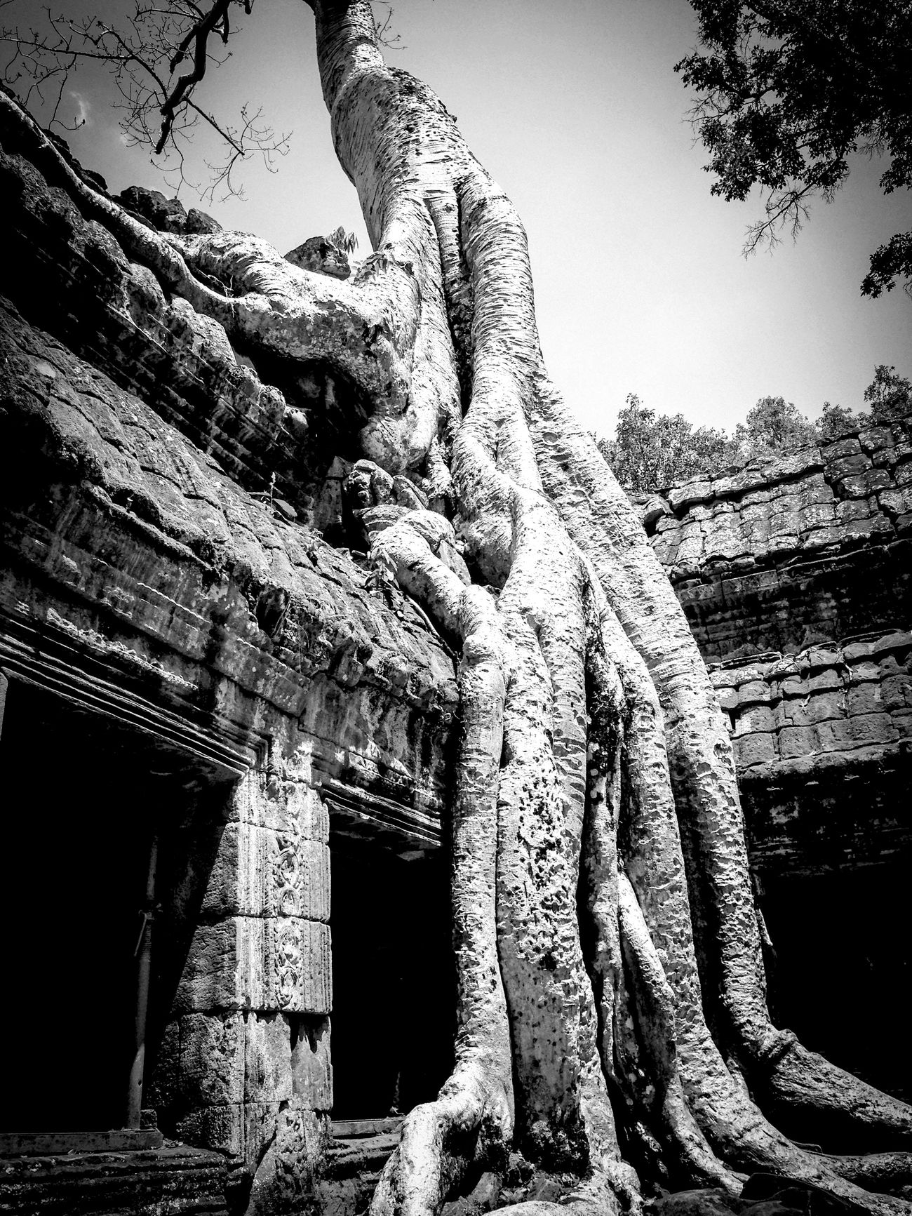 Exploring Blackandwhite Black And White Hugging A Tree Trees Temple Holiday History Historic Historical Building Historical Place Historical Buildings Historical Site Nature Cambodia