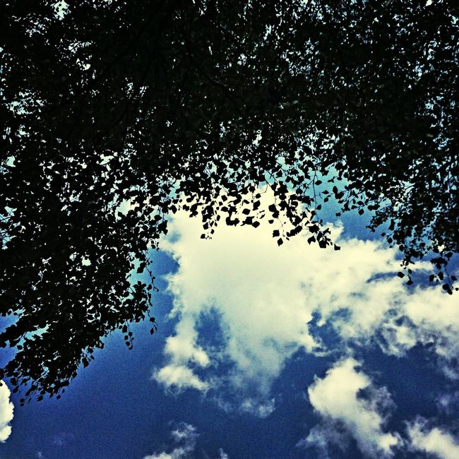 Birch Sky Hello World I Love This World