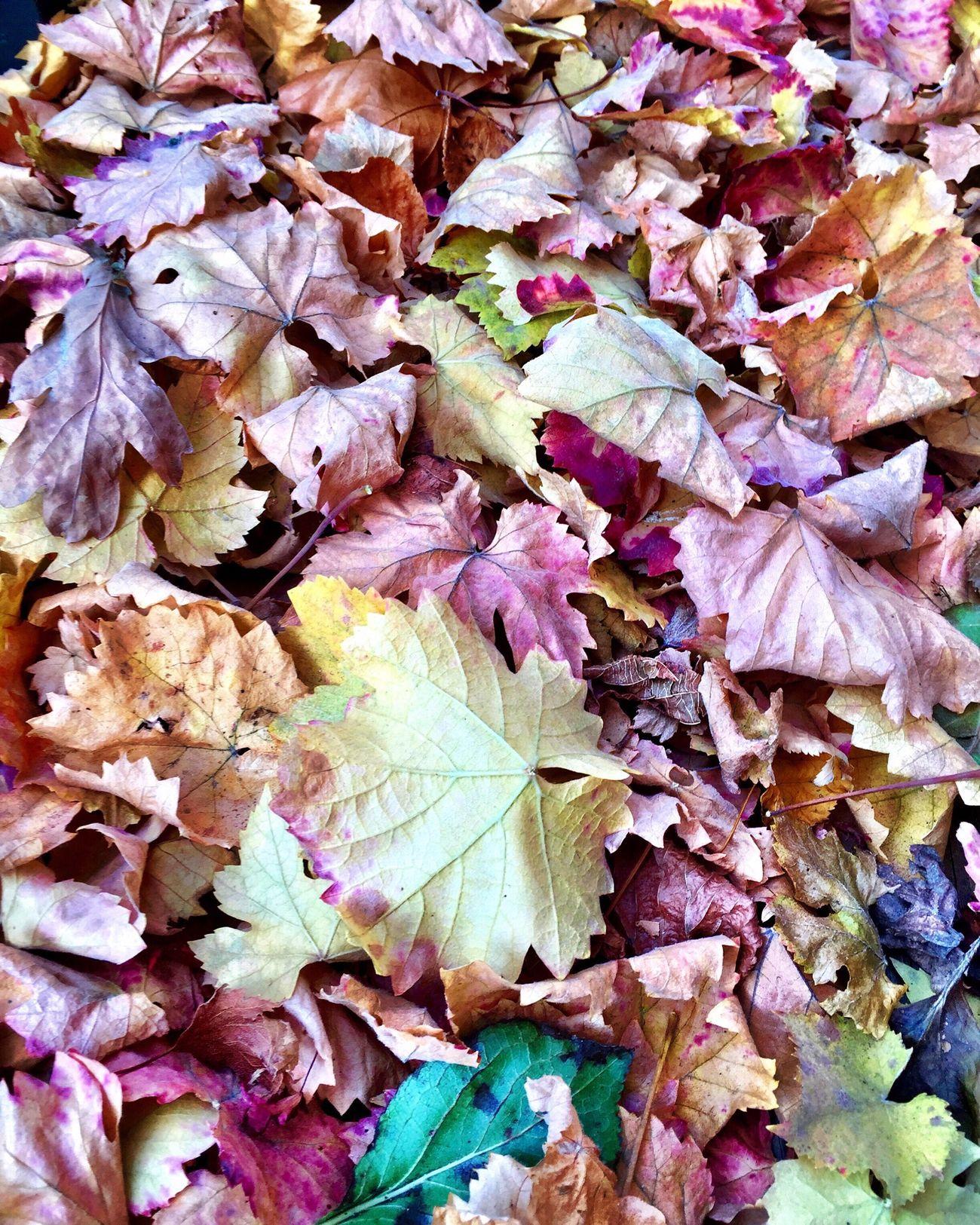 Autumn leaves Eye4photography  EyeEm Best Shots The Week On Eyem Eye4delight EyeEm Nature Lover Nature_collection EyeEm Gallery Autumn Colors Nature