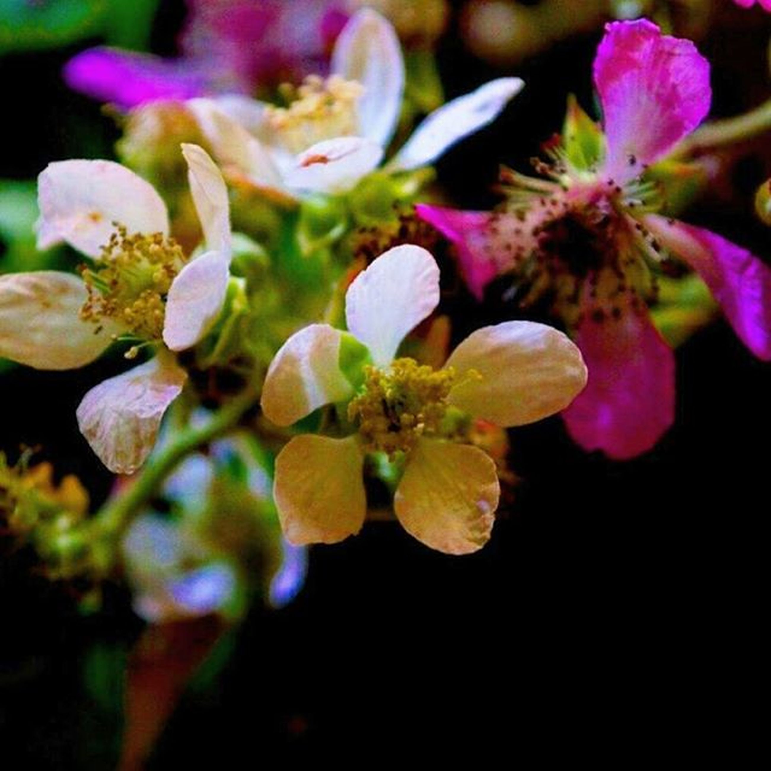 flower, freshness, petal, fragility, growth, beauty in nature, flower head, close-up, nature, focus on foreground, purple, plant, blooming, bud, in bloom, blossom, stem, selective focus, stamen, botany