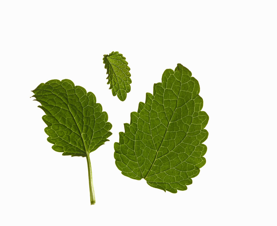 Leaf Herb Studio Shot Vegetable Healthy Eating Plant Food Freshness Green Color Nature No People Close-up Beauty In Nature Biology Mint Leaves Mint Green Mint