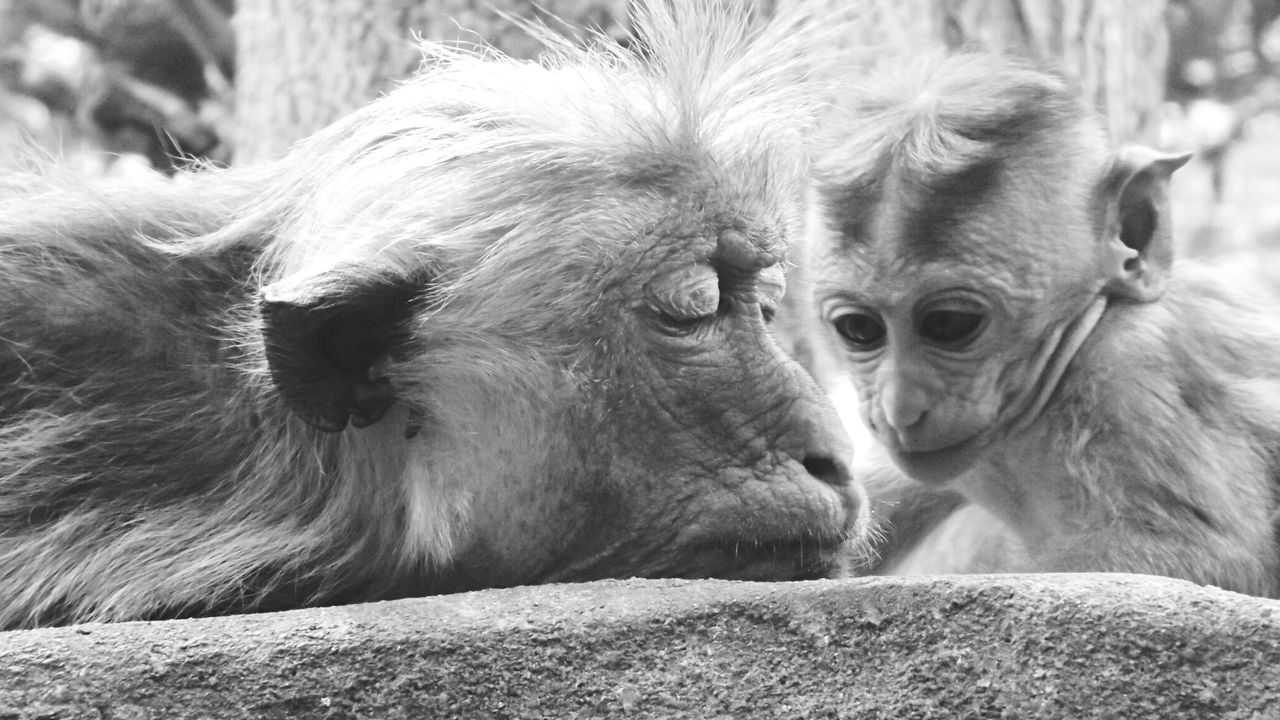 Close-Up Of Monkey With Infant