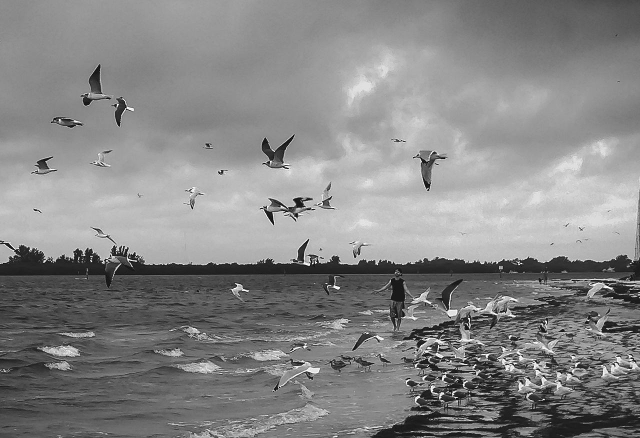 flying, large group of animals, flock of birds, bird, animals in the wild, sky, mid-air, animal wildlife, cloud - sky, nature, spread wings, real people, seagull, water, sea, migrating, outdoors, large group of people, beauty in nature, beach, togetherness, lifestyles, day, men, people