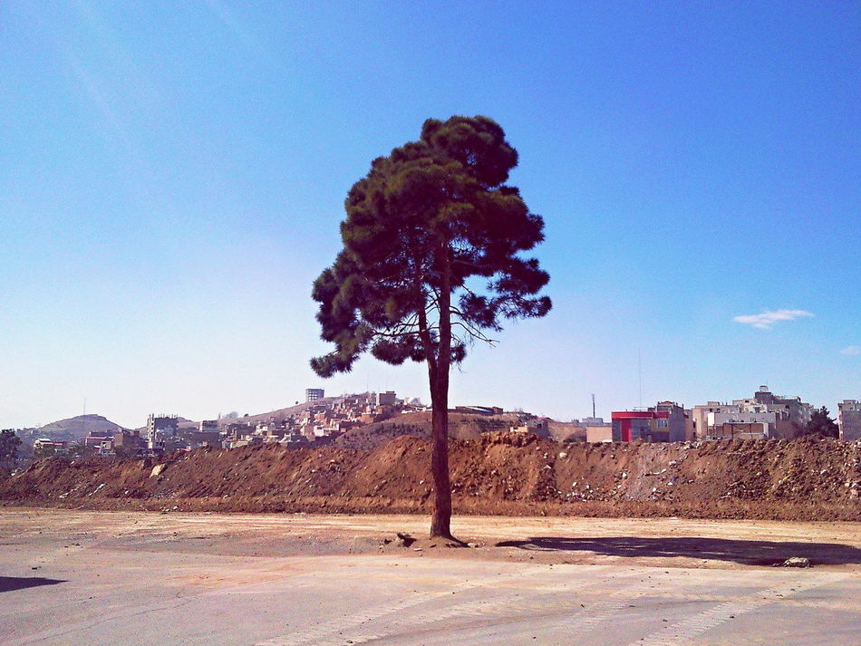 Lonely Tree Architecture Building Exterior Day Lonely Tree Lonely Trees Nature No People Outdoors Sky Tree_collection  Tree_collection  Trees And Sky Single Tree Single Single Life  تنها تک درخت درخت درخت تنها