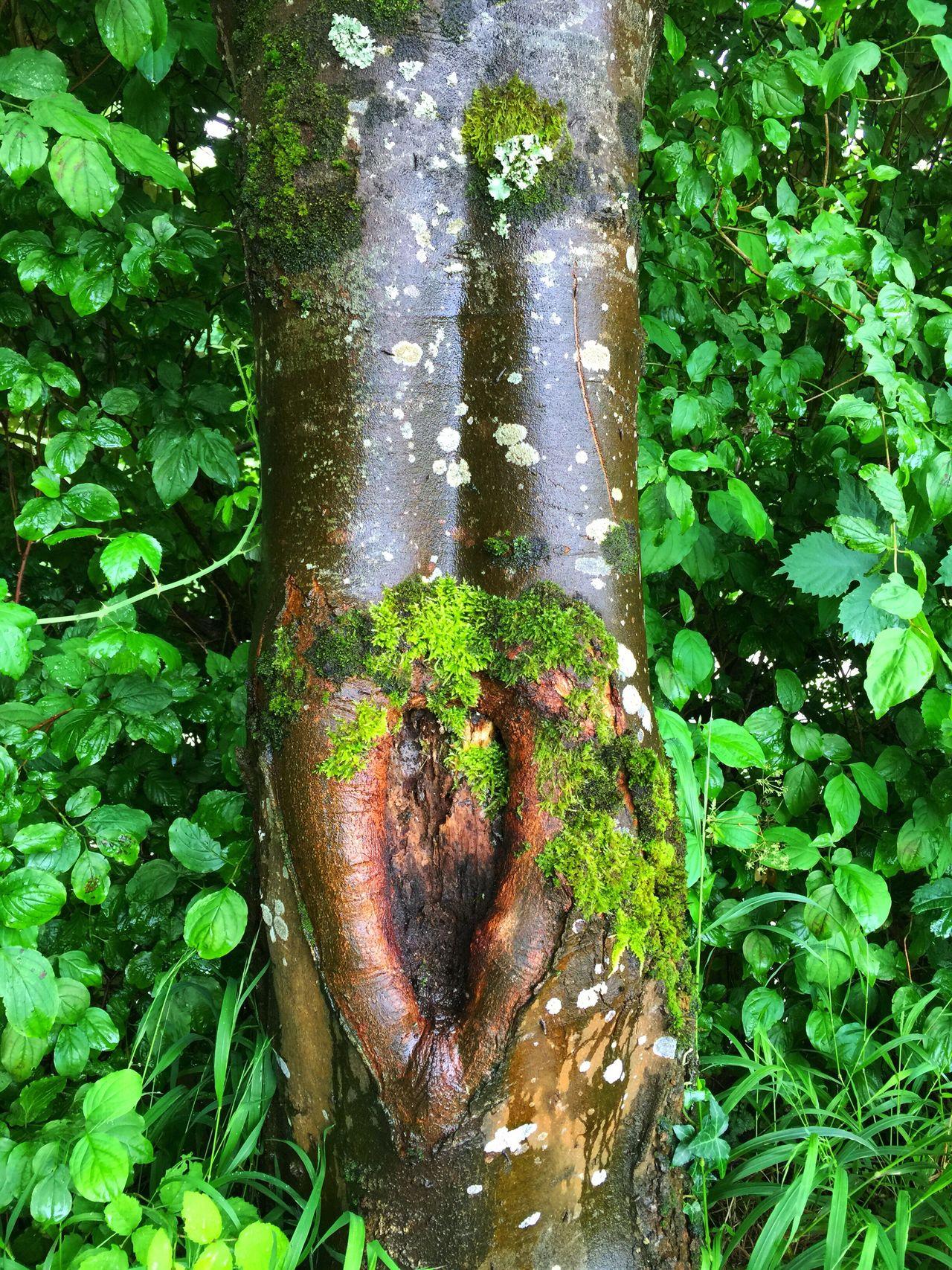 Nature Sur Le Chemin En Balade Sur Les Chemins Au Bord De L'eau Arbre Tree