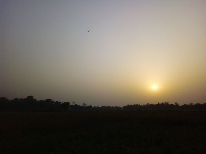 Flying Nature Beauty In Nature Sunset Landscape Sky Nature Field Beauty In Nature Falcon Bird Bird Photography