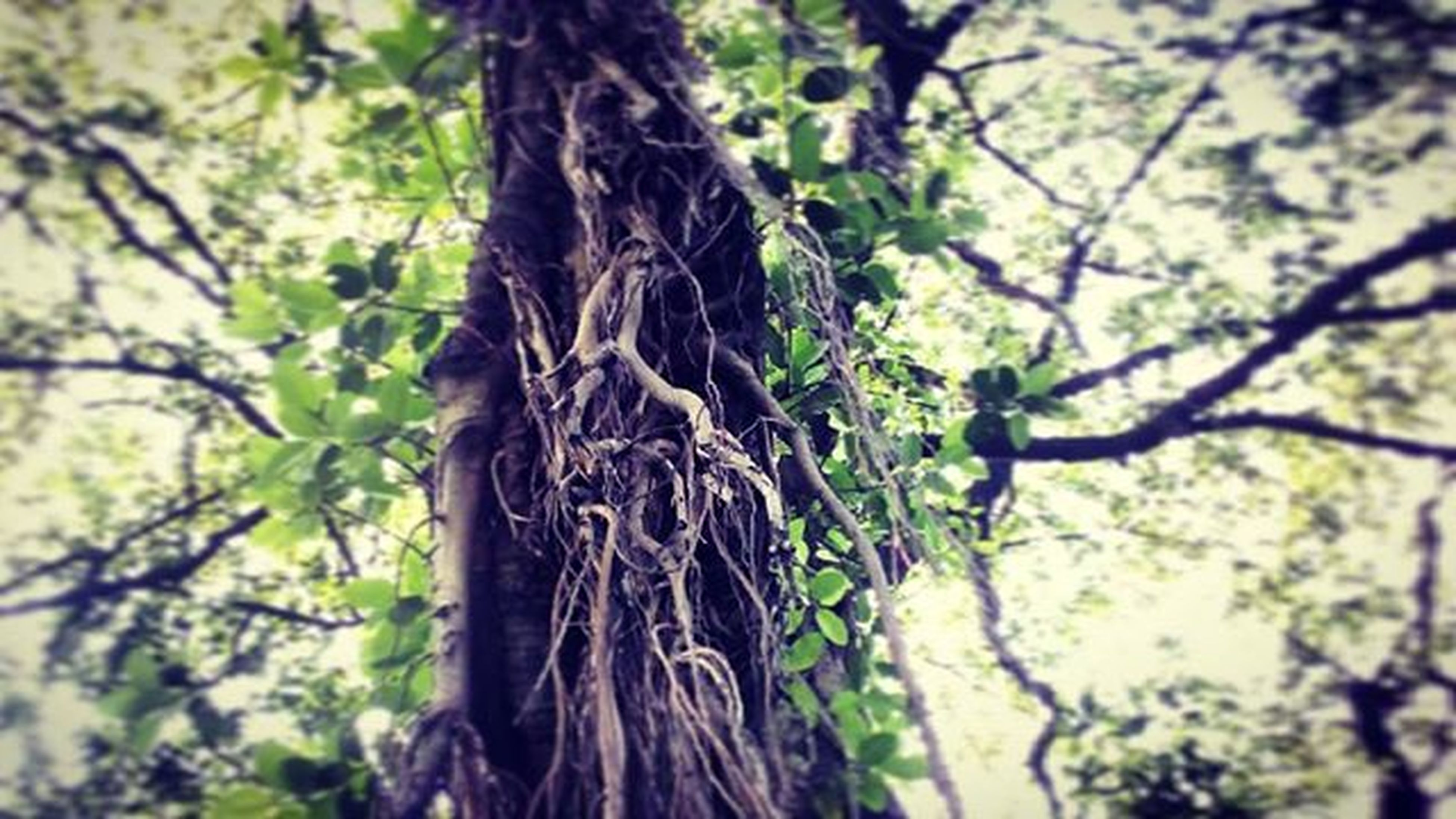 tree, branch, low angle view, tree trunk, growth, focus on foreground, nature, close-up, tranquility, beauty in nature, forest, day, outdoors, bark, selective focus, sky, no people, twig, sunlight, leaf
