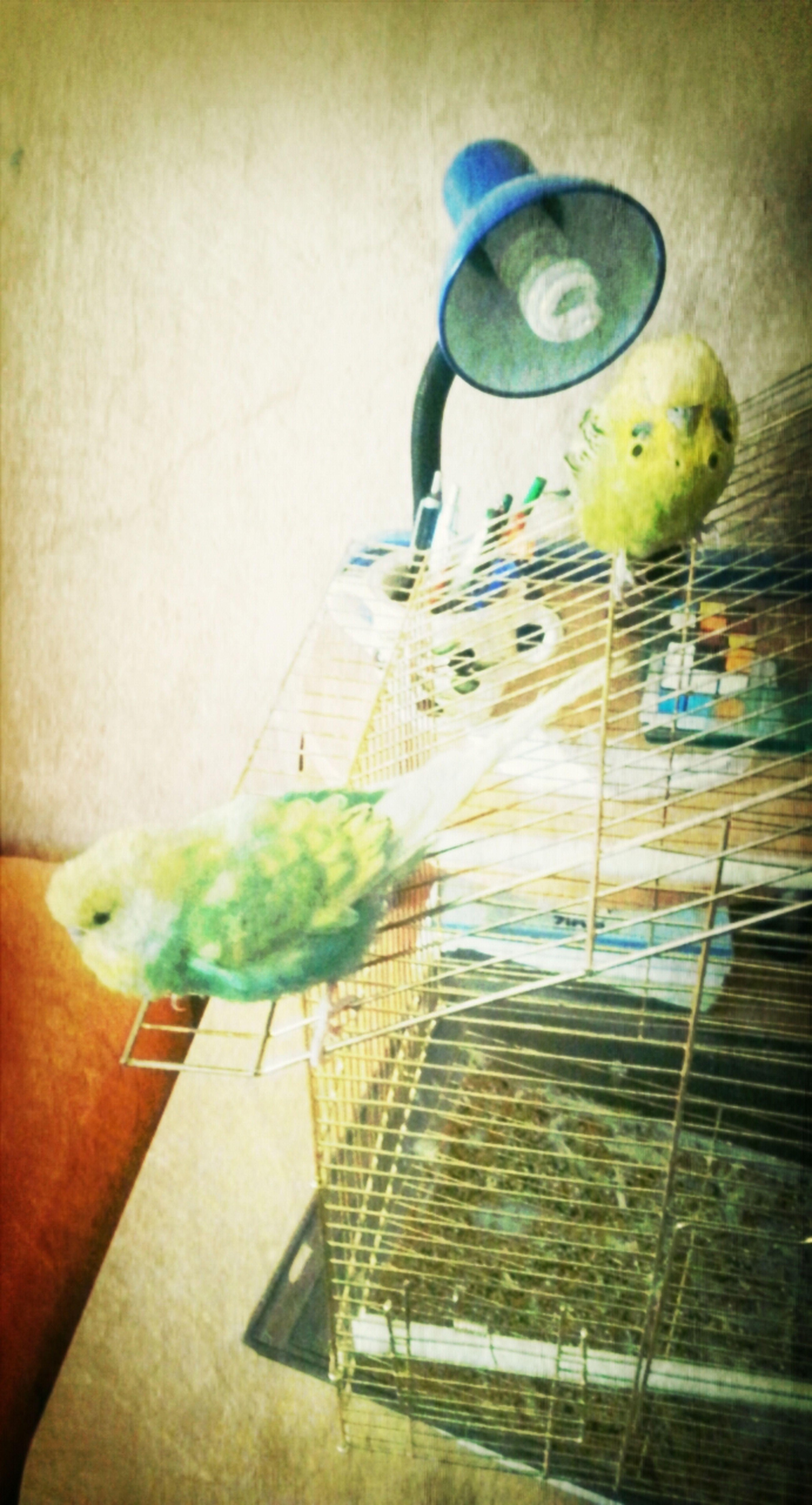 kuşlarım <3