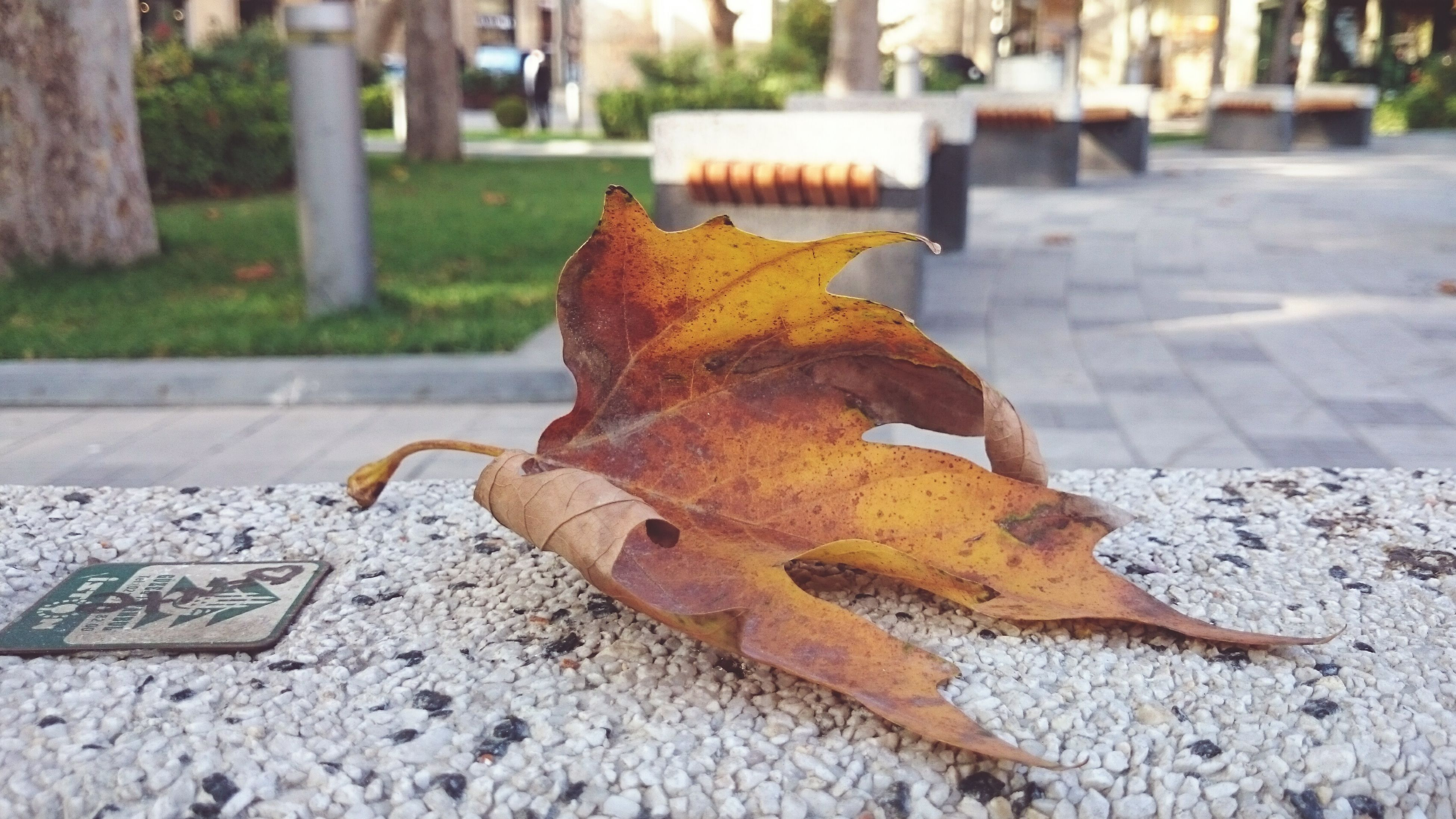 street, focus on foreground, leaf, close-up, road, autumn, selective focus, day, surface level, sidewalk, outdoors, asphalt, sunlight, ground, no people, change, fallen, dry, footpath, leaves