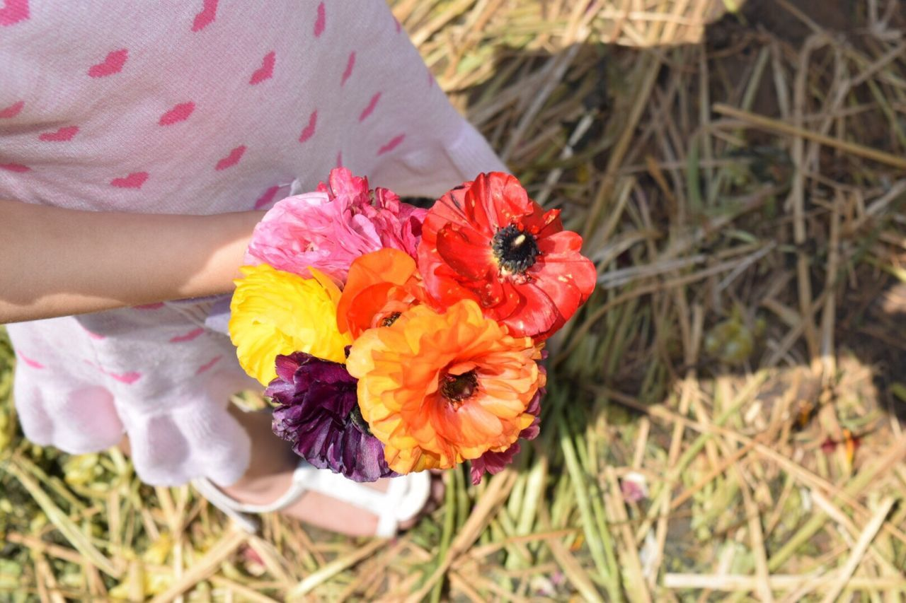 Flower Petal Fragility Freshness Flower Head Nature Real People One Person Vertical Outdoors Beauty In Nature Growth Women Human Body Part Close-up Human Hand Low Section People Holding Young Girl Flowers Freshness Summer Spring Spring Flowers Live For The Story