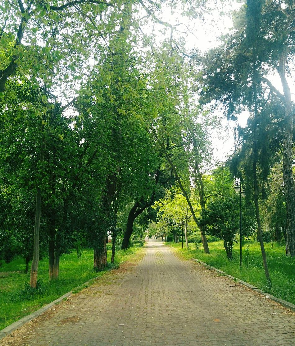 Tree The Way Forward OutdoorsDay Nature Road Beauty In Nature Growth Green Color No People Scenics Tranquility Secret Places Forestwalk