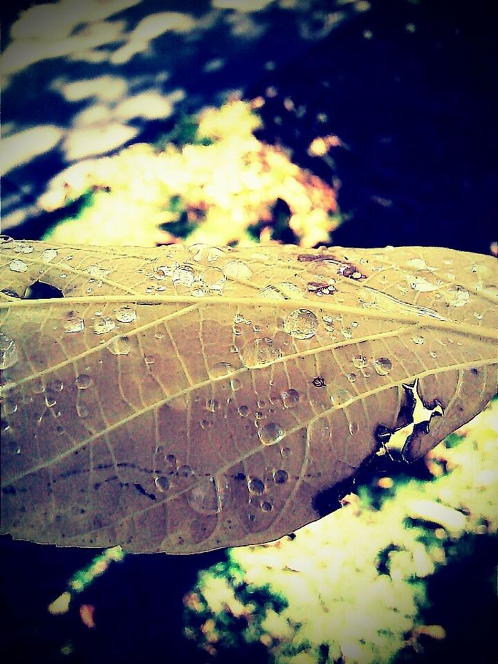 Leaf Autumn Water Nature Fallen Leaf Close-up Photographywithphonecamera Lovephotographyandnature Takenbyme