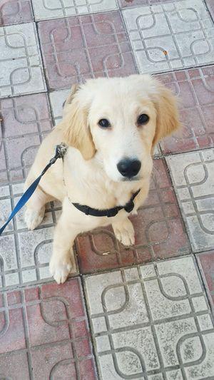 I Love My Dog My Lovely Dog Cute Pets Dog My Love❤