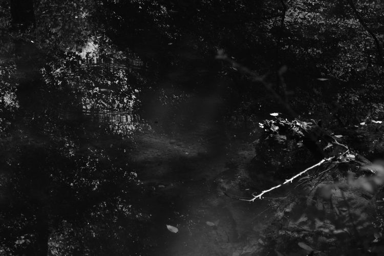 Composition Dark Abstract Animal Themes Beauty In Nature Blackandwhite Branch Close-up Day Forest Growth Low Angle View Monochrome Nature No People Outdoors Pattern Sky Swimming Tranquility Tree UnderSea Underwater Water
