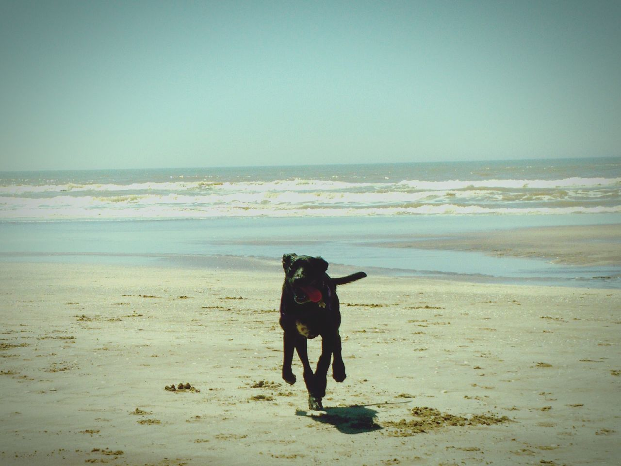 Sea Beach Horizon Over Water Sand Day Mammal Sky Outdoors Dogs_of_instagram Dogs Of EyeEm Blackdogs Landscape_Collection Seaside_collection Buenos Aires, Argentina  Having A Good Time