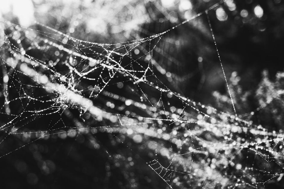 Spider web Spider Web Web Focus On Foreground Nature Close-up Fragility Droplet Spider Drop Outdoors Day Trapped No People Water Beauty In Nature Freshness Animal Themes Springtime Black And White Black & White