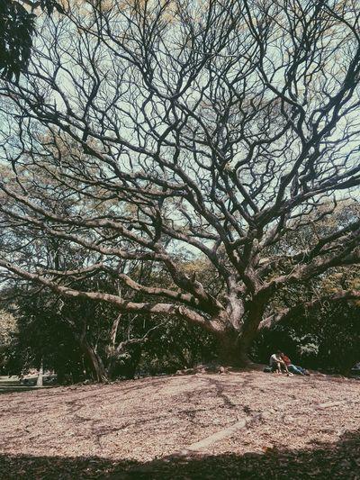 University Campus Enjoying Life Tree