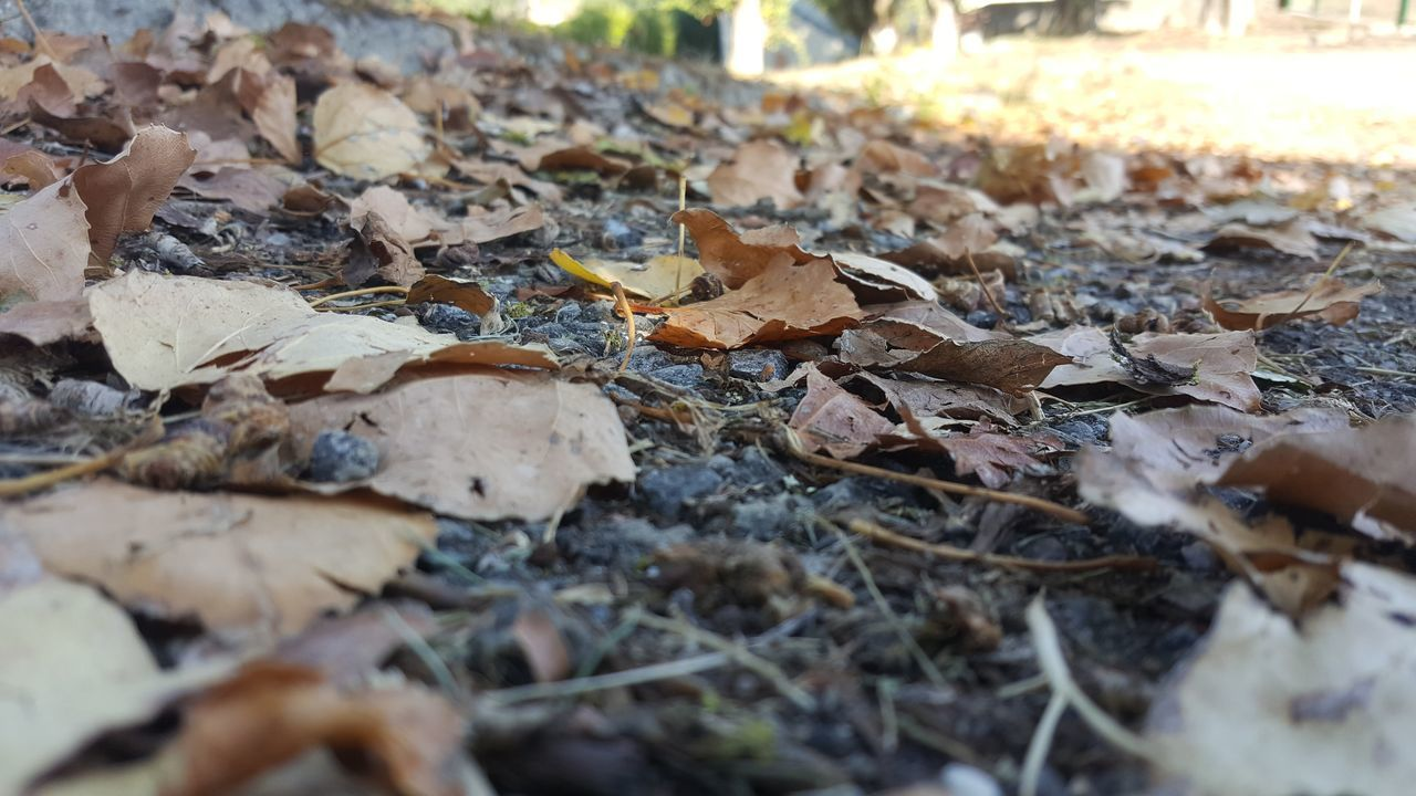 leaf, autumn, change, dry, leaves, selective focus, nature, fallen, day, outdoors, no people, close-up, fragility, beauty in nature