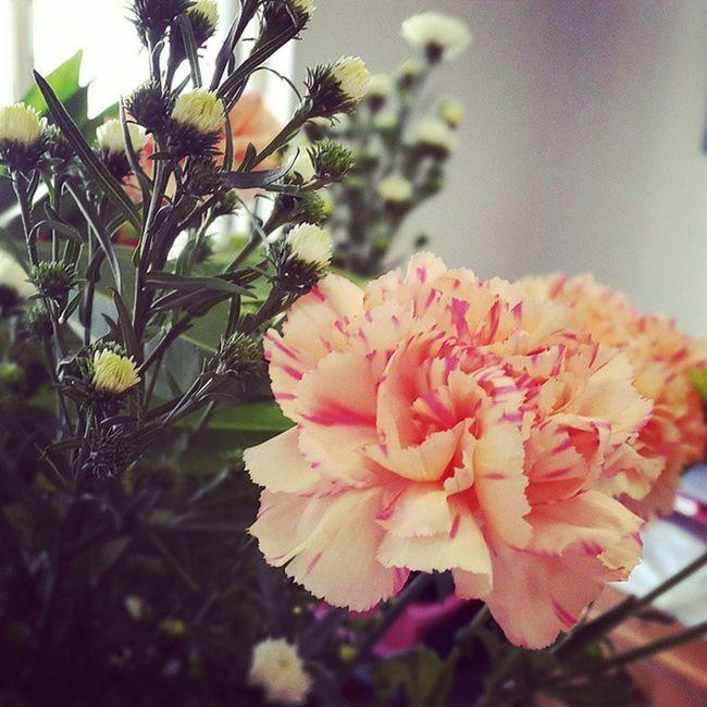 Newflowers Carnations Orange Officebeauty