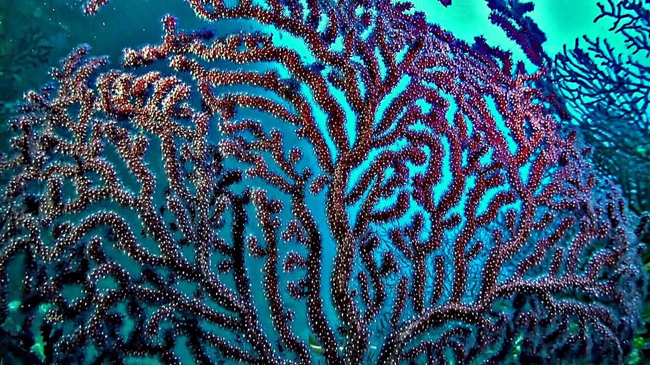 Coral Colored No People Seascape Submarine World Beauty In Nature Reef Coral Biology Sealife Fragility Nature Underwater Diving Close-up UnderSea Water Animal Themes