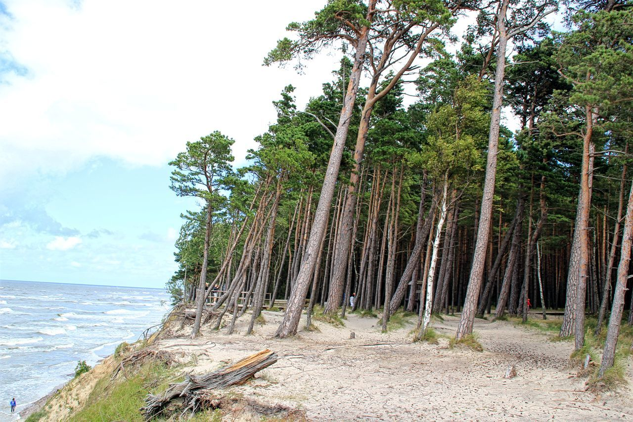Baltic Sea Beach Beauty In Nature Day Forest Growth Horizon Over Water Nature No People Outdoors Scenics Sea Seashore Sky Tranquil Scene Tranquility Tree Tree Trunk Water