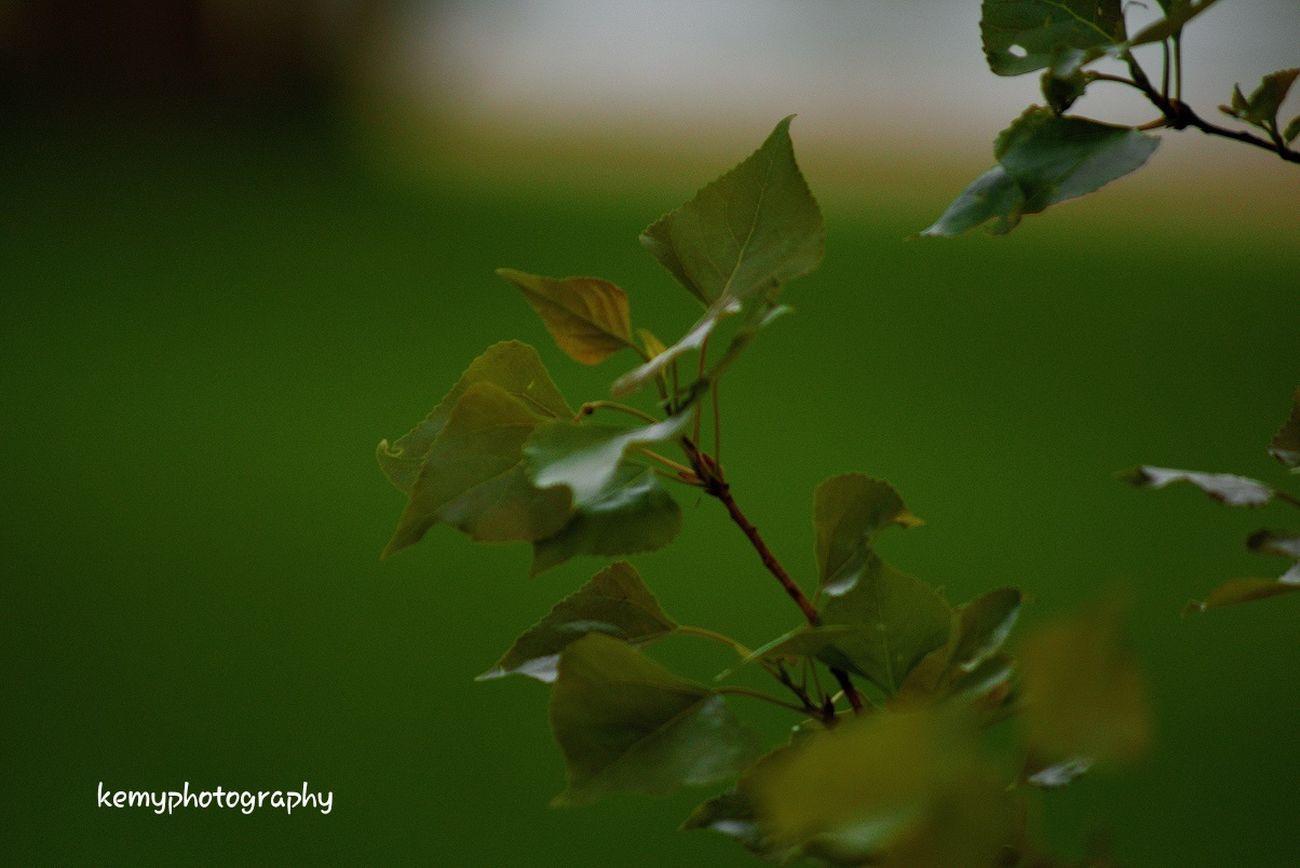 Parc De Sceaux Kemyphotography Nature