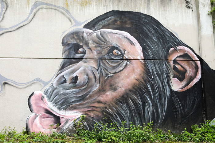 Chimp Chimpanzee Graffiti Grafiti Art Mural Mural Art Painting Schimpanse Shouting Art Is Everywhere