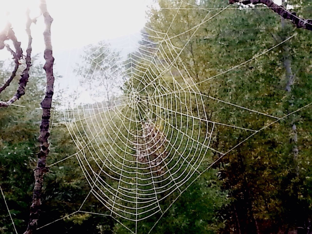 spider web, web, nature, trapped, focus on foreground, outdoors, no people, fragility, close-up, spider, day, beauty in nature, growth, complexity, tree, animal themes, freshness