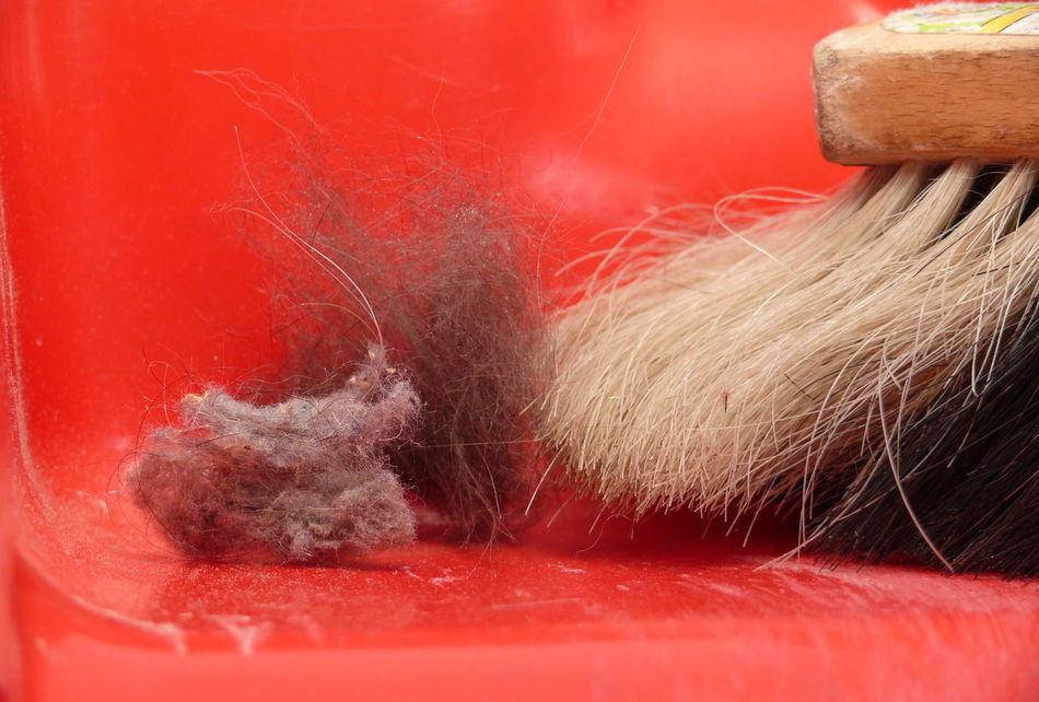 Besen Cathairs Close-up Day Dreck Dust Handfeger Indoors  Kehrblech Motion No People Red Red Background Schmutzig Staub Aufwirbeln