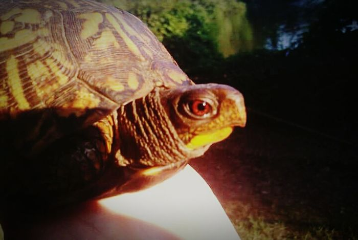 Nature Turtle The Great Outdoors With Adobe Nature Photography Nature_collection Nature Diversities