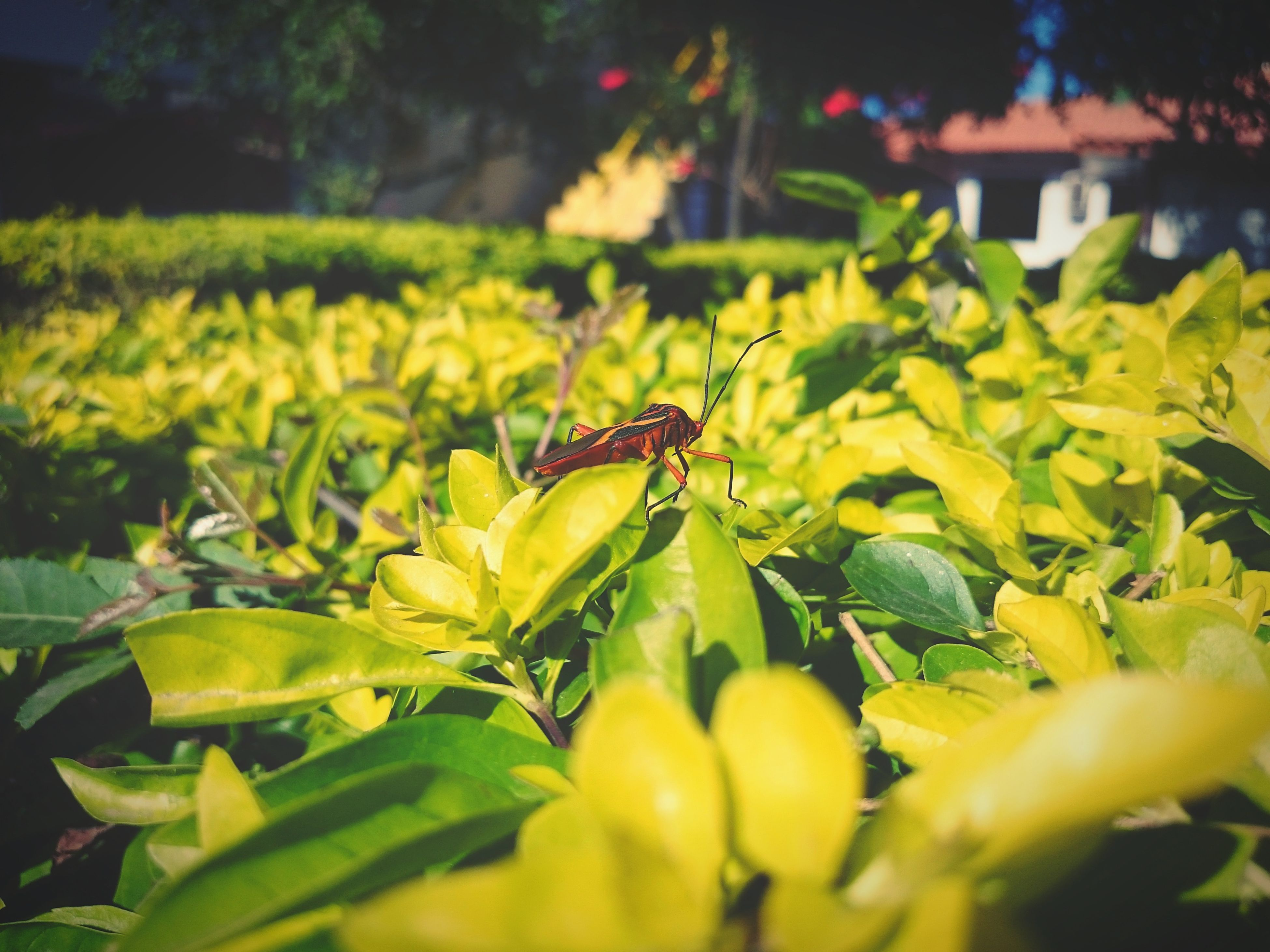 nature, insect, plant, focus on foreground, one animal, green color, close-up, animals in the wild, growth, beauty in nature, animal themes, flower, sunlight, day, no people, leaf, outdoors, animal wildlife, flower head, freshness, fragility